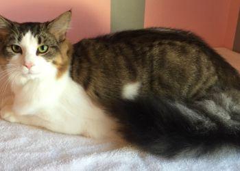 Newport News pet grooming PURROCIOUS STYLES FELINE DESIGNS
