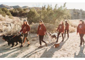 Albuquerque dog walker Paws In Action