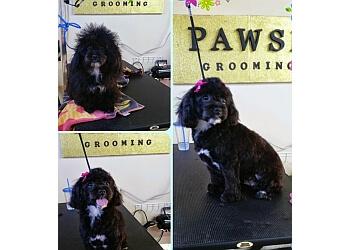 Ontario pet grooming Pawsh Grooming