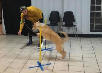 Baltimore dog training Pawsitive Paul's Dog Training