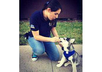 Chula Vista dog walker Pawsitive Pets