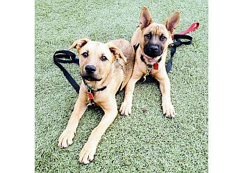 Albuquerque dog training Pawsitive Training ABQ