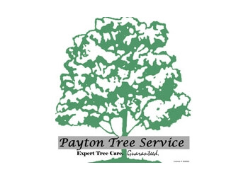 Vallejo tree service Payton Tree Service