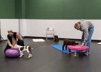 Houston dog training Peace Love and Dogs