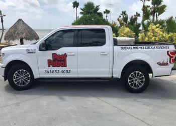 Corpus Christi pest control company Pest Patrol