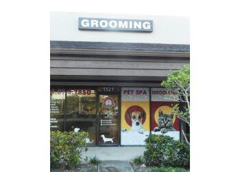 Pembroke Pines pet grooming Pet Spa Grooming By Patty B