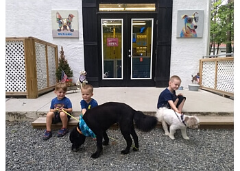 Durham pet grooming  Petropolitan dog grooming