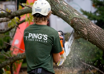 3 Best Tree Services In Indianapolis In Expert