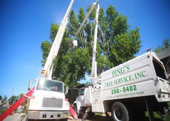 Indianapolis tree service Ping's Tree Services