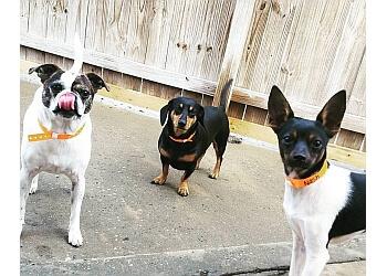 Columbus pet grooming Playful Pups