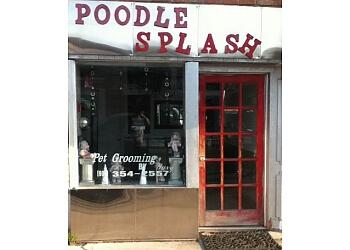 Elizabeth pet grooming Poodle Splash