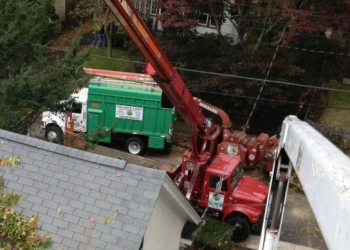 Yonkers tree service Potanovic & Sons Professional Tree Care, Inc.