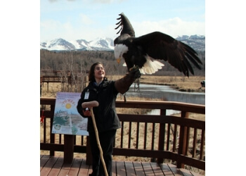 Potter Marsh Bird Sanctuary Anchorage Places To See