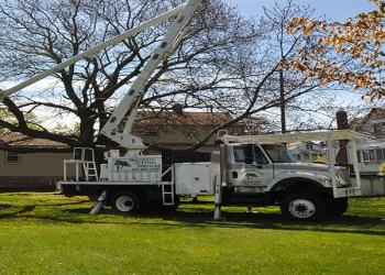 New Haven tree service Precision Cutting Services