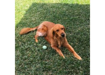 Dallas dog walker Prestigious Pets