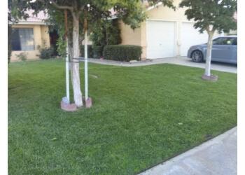 Pristine Lawn Care