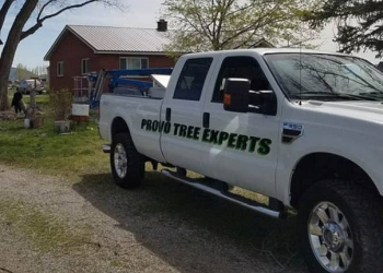 Provo tree service  Provo Tree Experts
