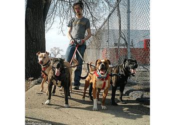 Detroit dog walker Puppin' Around