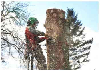 Brownsville tree service Putegnat Tree Service