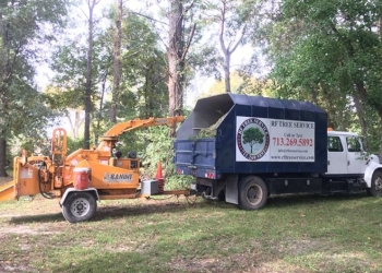 Houston tree service RF TREE SERVICE