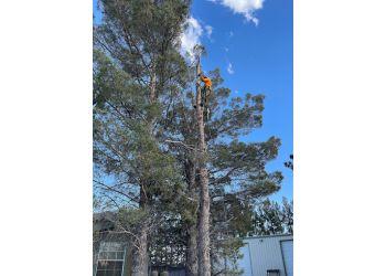 El Paso tree service R&M Tree Service