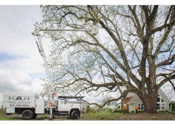Salem tree service R & R Tree Service, Inc.