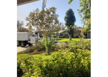 Bakersfield tree service Rancho Tree Service