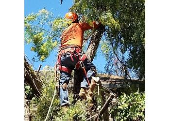 Vallejo tree service Ray's Tree Services