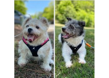 Birmingham dog walker RedDog Sitting Services, LLC