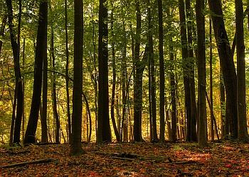 Buffalo hiking trail Reinstein Woods Nature Preserve Trail