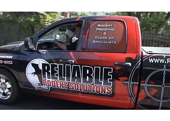 Reliable Rodent Solutions Concord Pest Control Companies