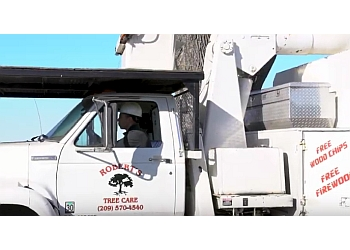 Stockton tree service Robert's Tree Care