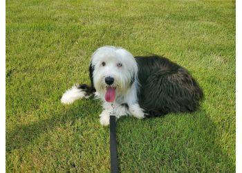 Little Rock dog walker Rockin Paws