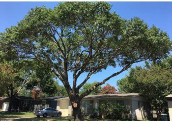 Dallas tree service Rodriguez Tree Service