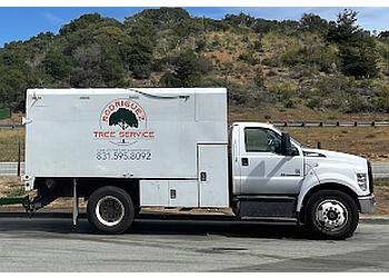 Salinas tree service Rodriguez Tree Service