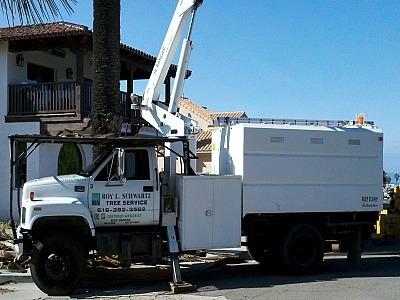 San Diego tree service Roy Schwartz & Son Tree Service