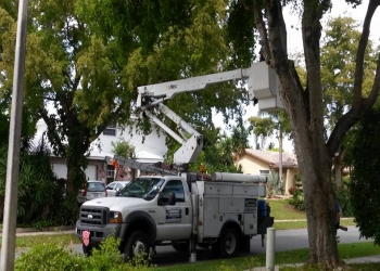 Hollywood tree service Royal Tree Service and Landscaping