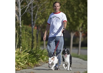 Sacramento dog walker  Ruffwalking