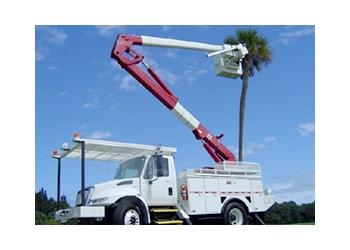 Jackson tree service  SDJ Tree Service