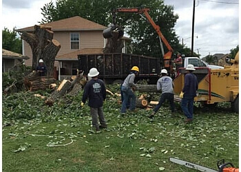 Grand Prairie tree service SP Tree Service Corp.