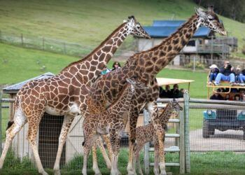 Santa Rosa places to see Safari West