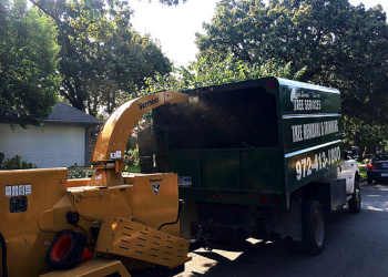 Irving tree service Salas Services