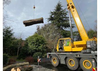 Seattle tree service Seattle Tree Care