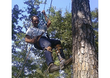 Beaumont tree service Secure Choice Tree Service