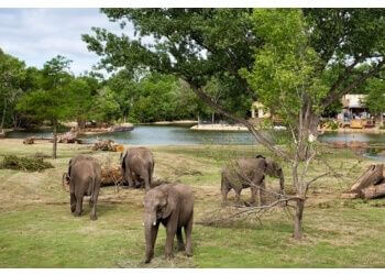Wichita places to see Sedgwick County Zoo