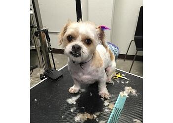Seusspup Pet Grooming