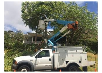 Honolulu tree service Sherwood's Tree Service