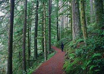 Salem hiking trail Silver Falls State Park Trail