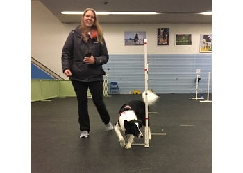 Columbus dog training Sky Dogs