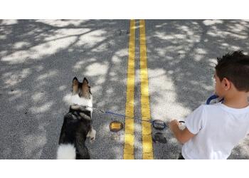 Fort Lauderdale dog training Smart Start Dog Training